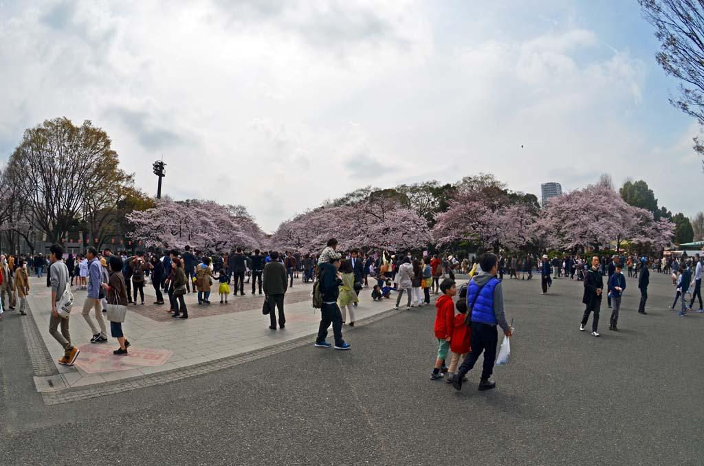 D70_8439上野の桜