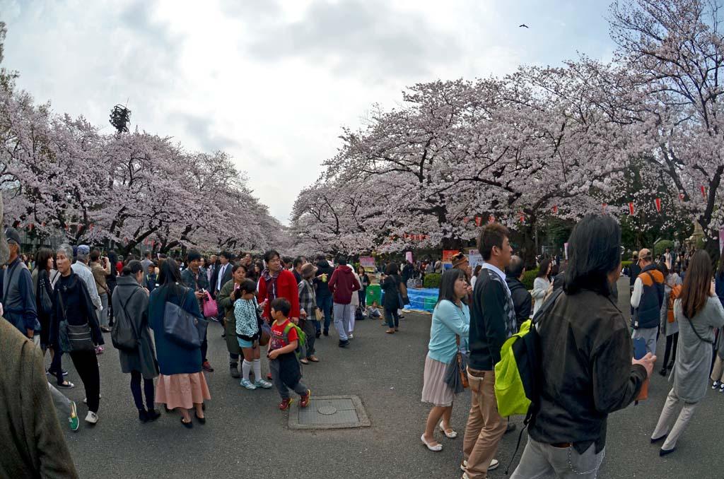 D70_8441上野の桜