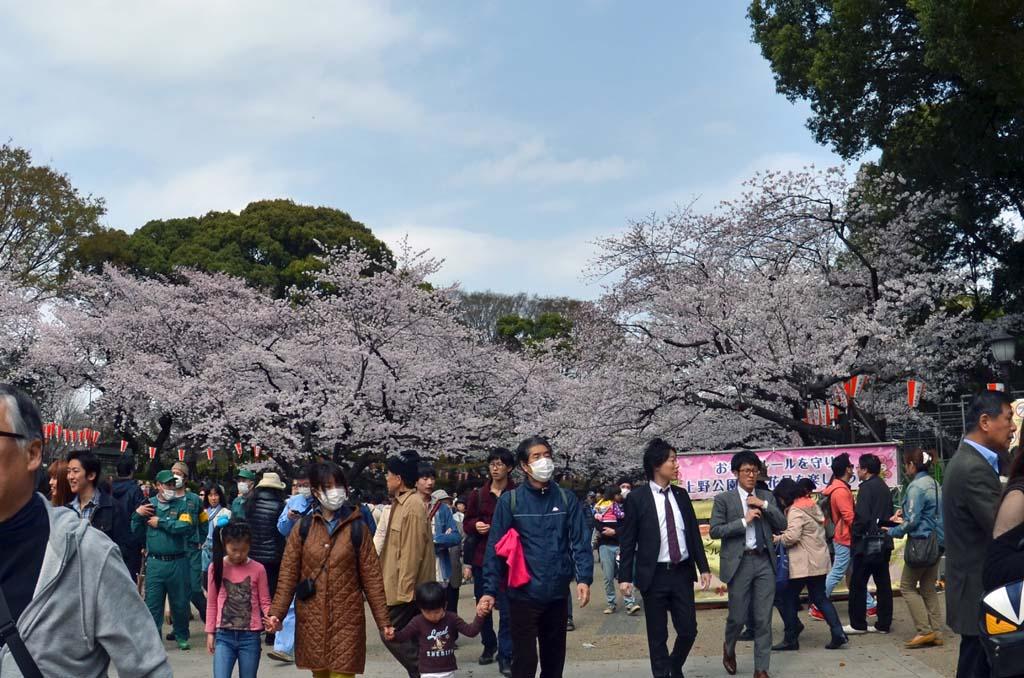 D70_8452上野の桜