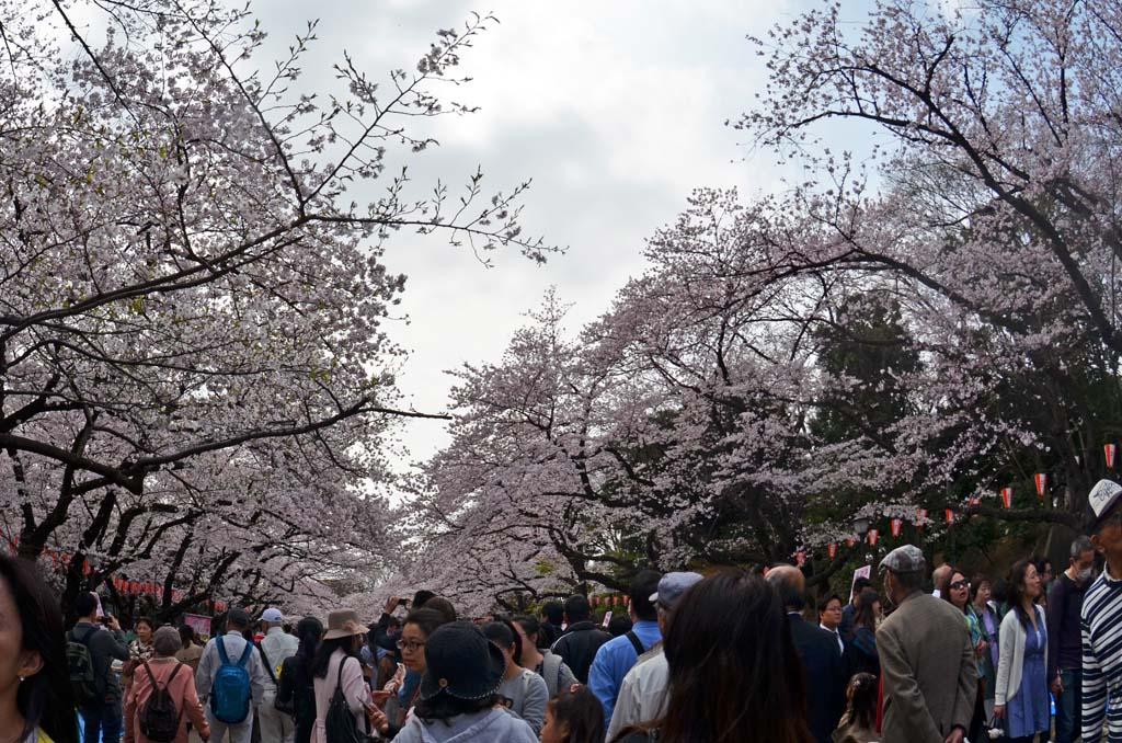D70_8443上野の桜