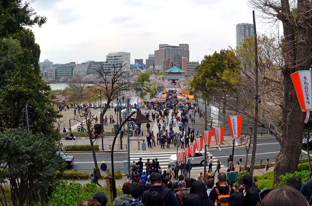D70_8453上野の桜