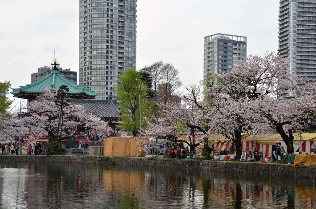 D70_8463上野の桜