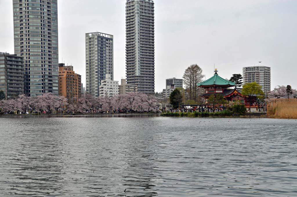 D70_8502上野の桜