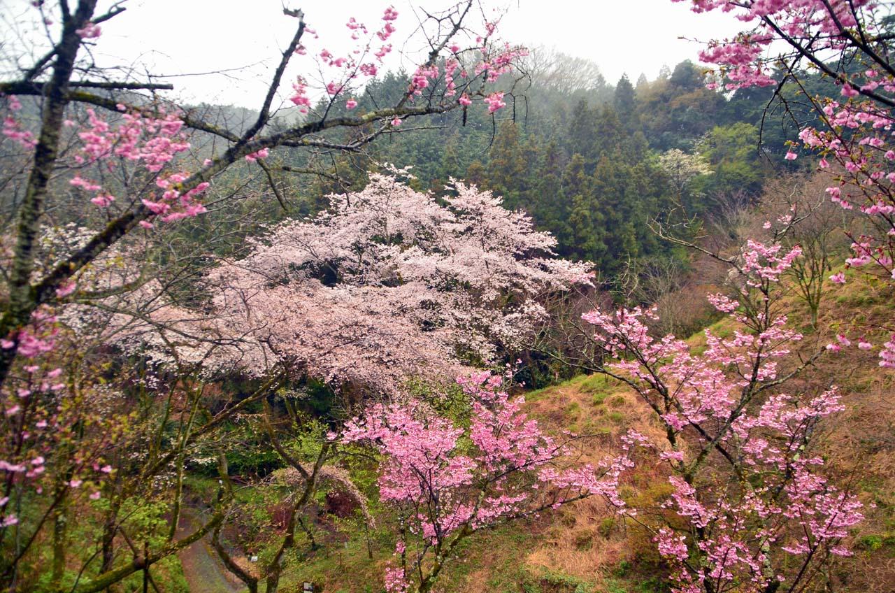 D70_8582桜園