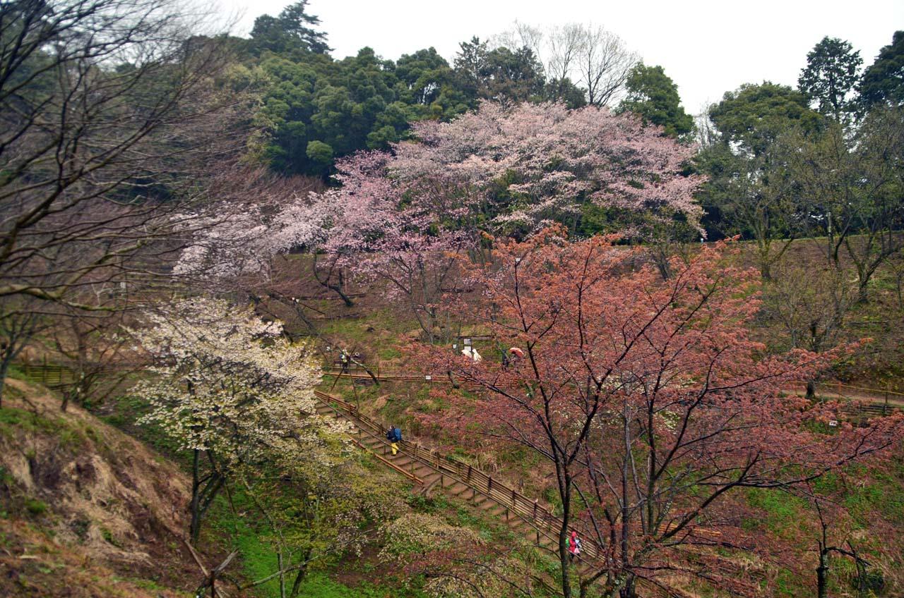 D70_8585桜園