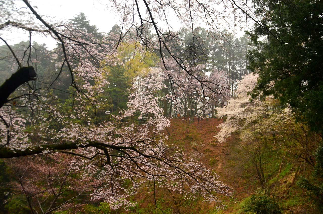 D70_8618桜園