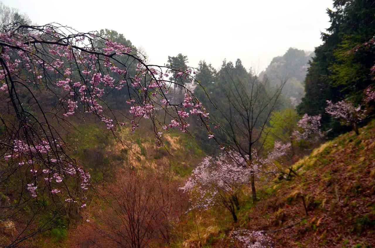 D70_8626桜園