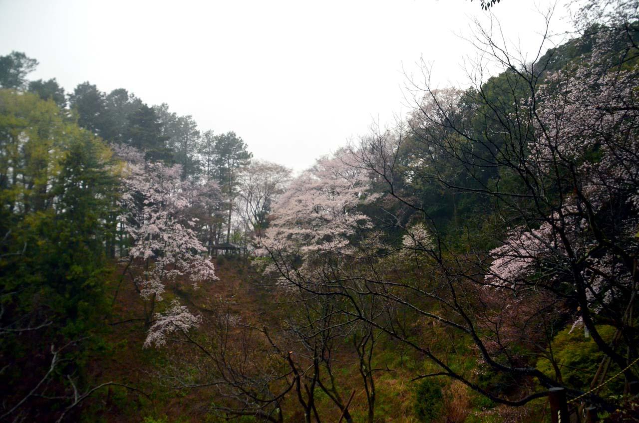 D70_8624桜園