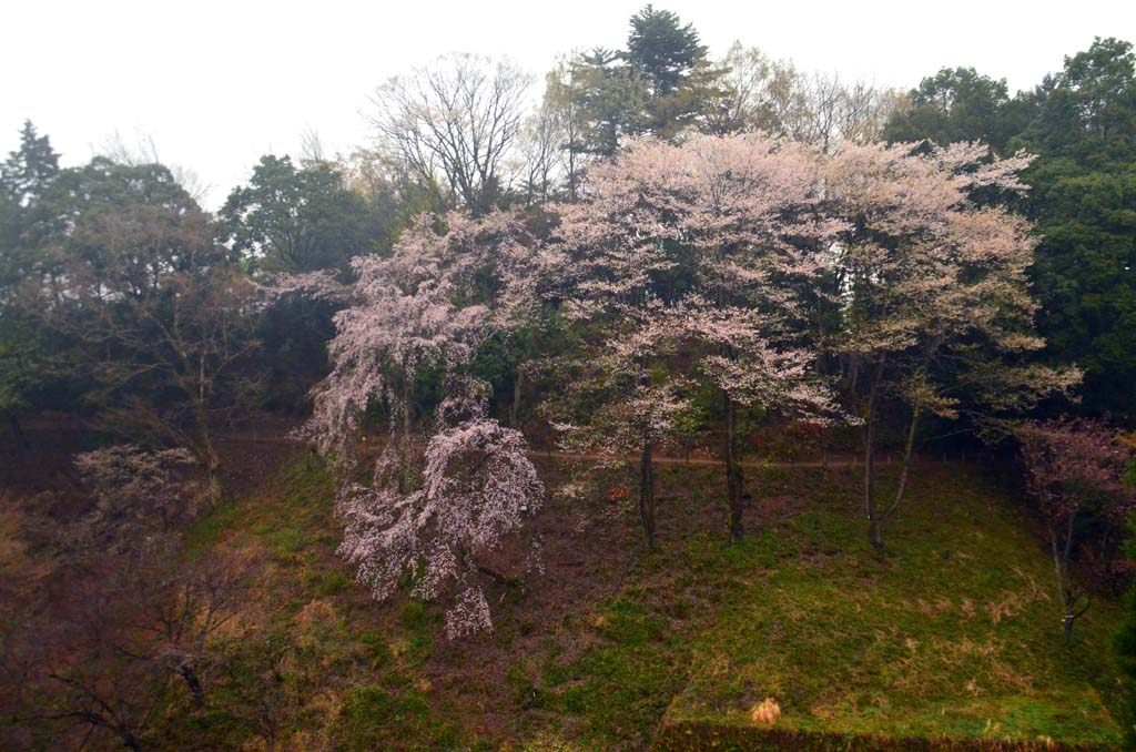 D70_8642桜園