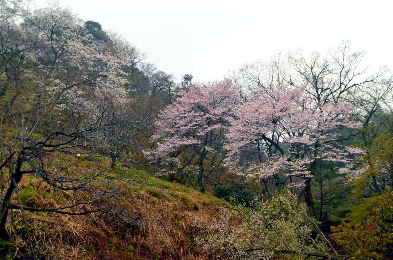 D70_8693桜園