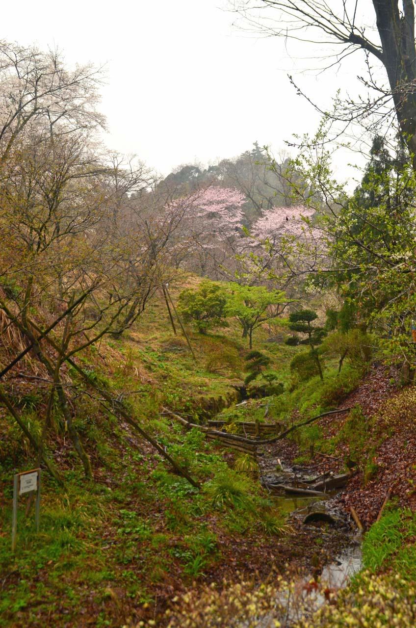 D70_8698桜園