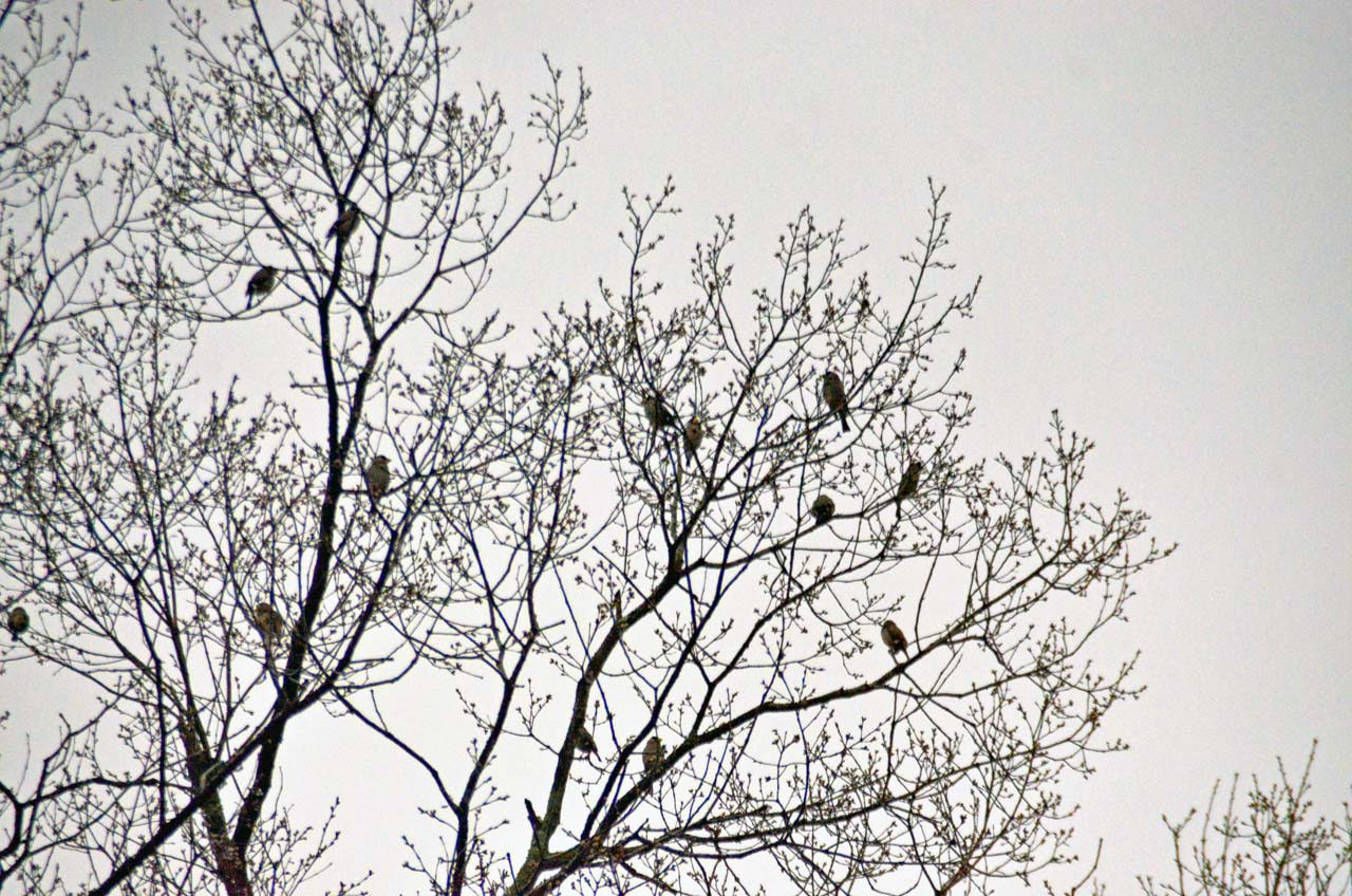 D70_8675桜園
