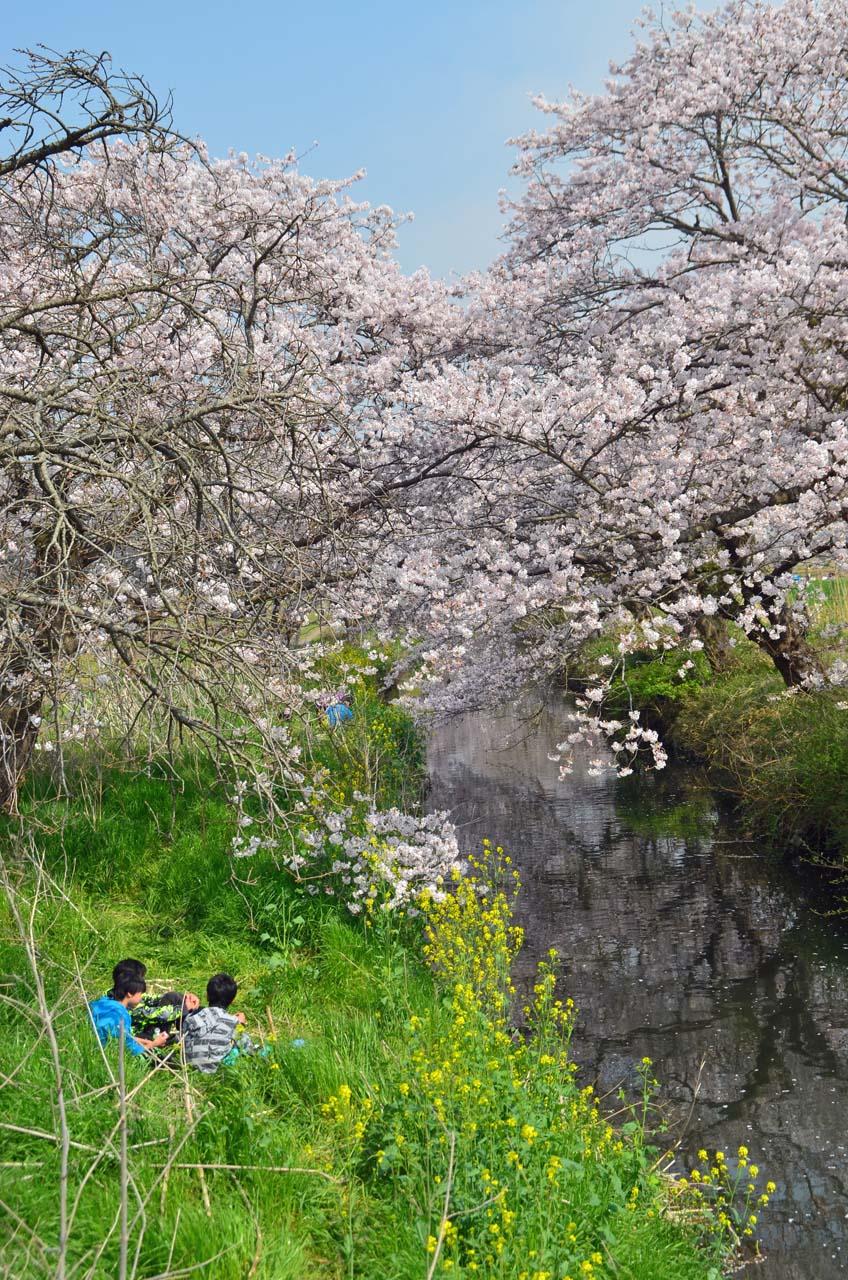 D70_8827今井の桜