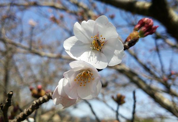 桜16032