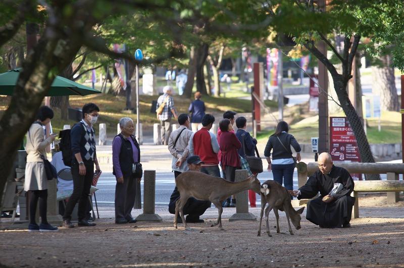 奈良公園 外国人観光客