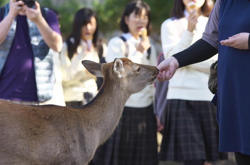 奈良公園 修学旅行