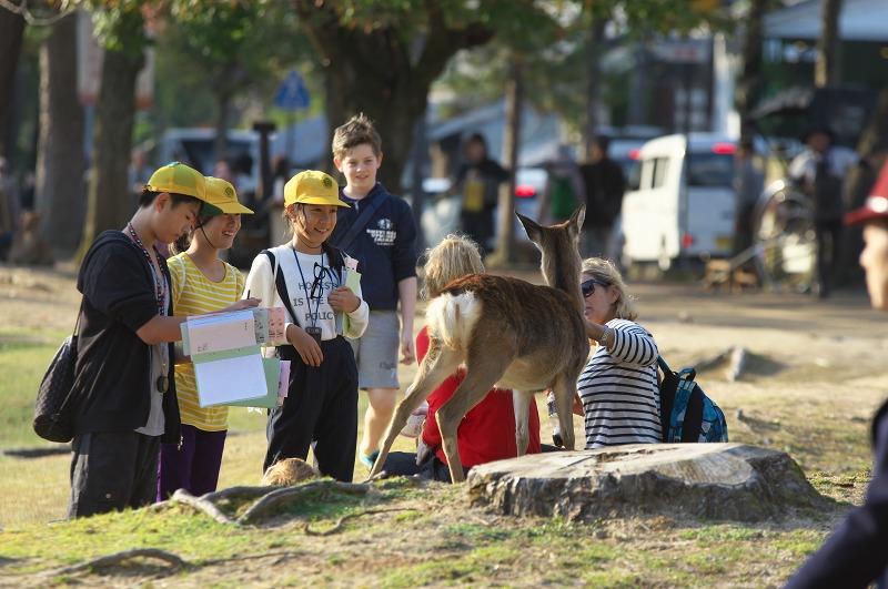 奈良公園 鹿 観光客