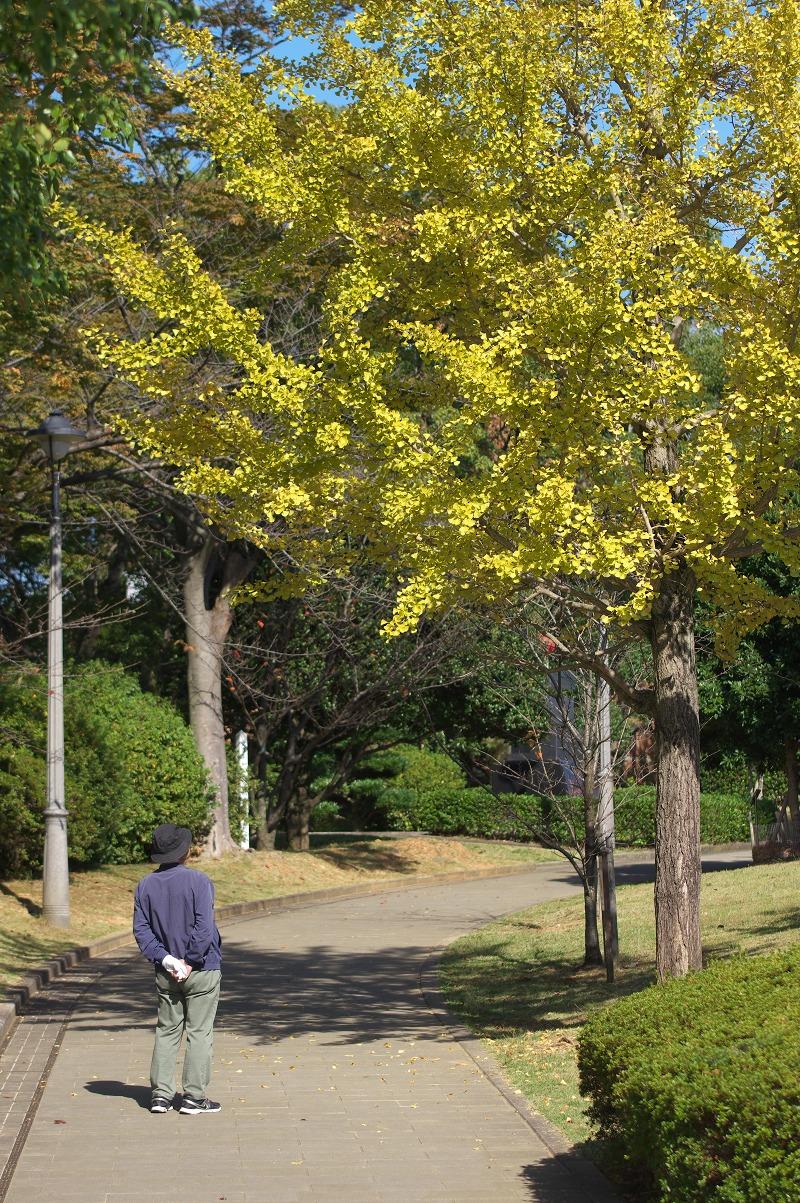長崎 平和公園 銀杏