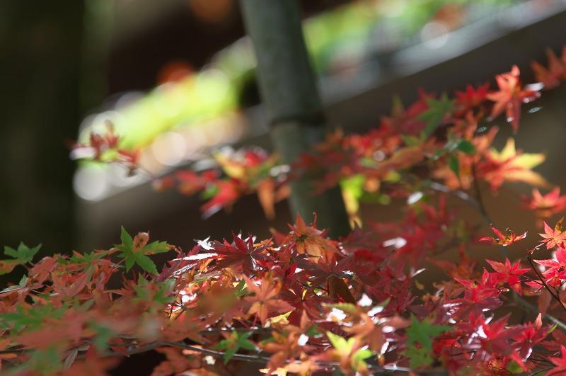 秋の京都大原 2015