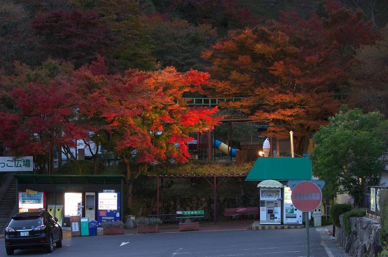 比叡山 夢見が丘 紅葉ライトアップ