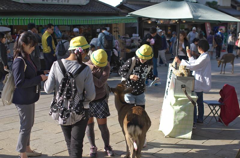 奈良公園 鹿 修学旅行生