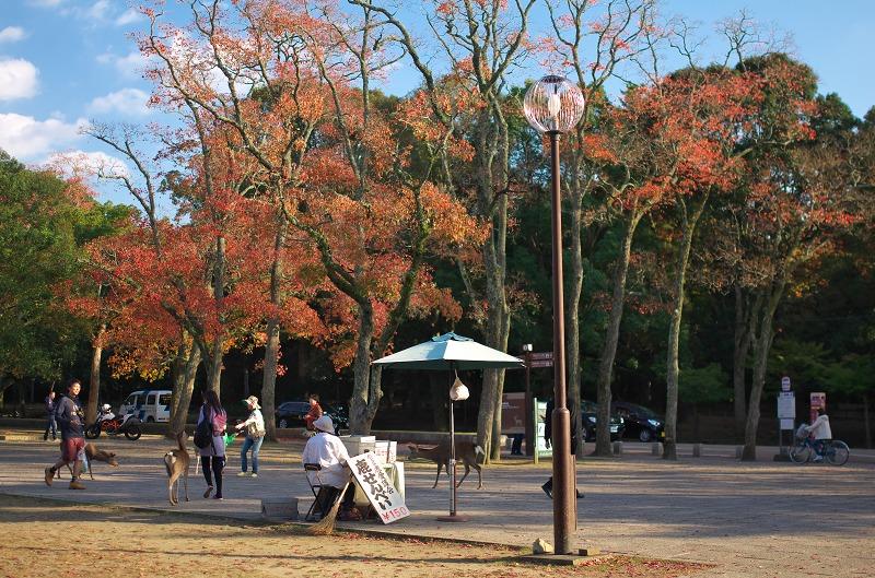 奈良公園 紅葉 2015