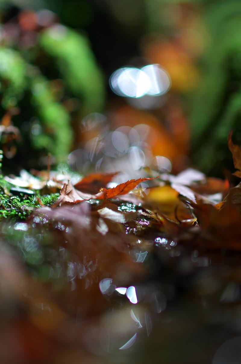 京都大原三千院 紅葉 落ち葉