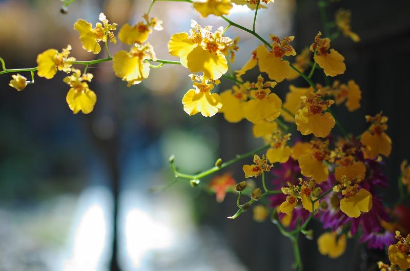 宝泉院 蘭の花