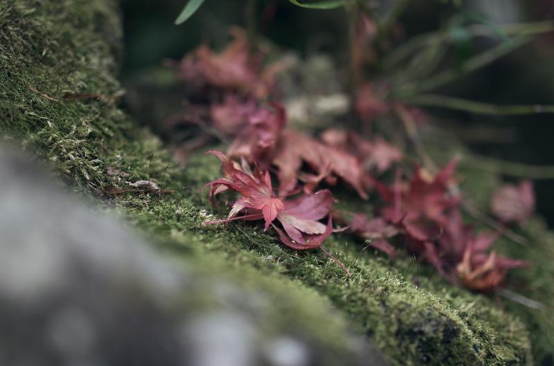 宝泉院 手水舎 紅葉