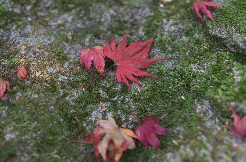 宝泉院 紅葉 落ち葉