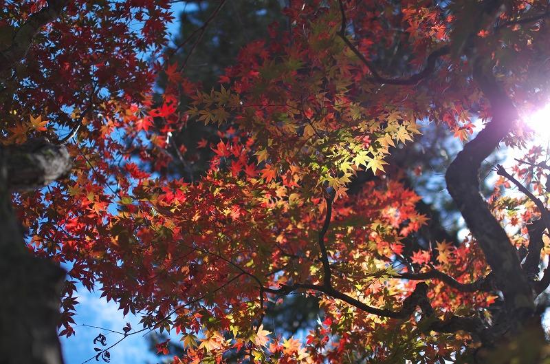 京都 龍隠寺の紅葉2015