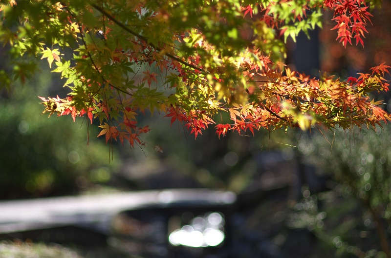 るり渓 紅葉 2015