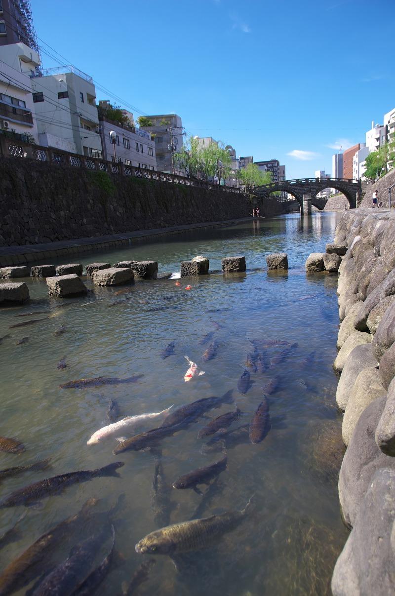 長崎 眼鏡橋 鯉