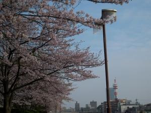 20160402_04名古屋国際会議場桜