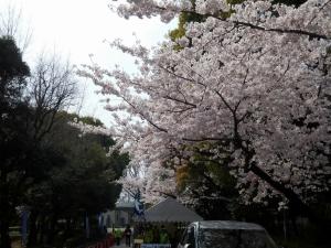20160402_27熱田神宮公園