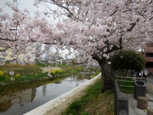 20160403_05山崎川桜並木