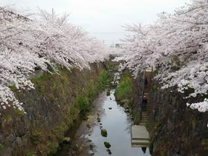 20160403_08山崎川桜並木