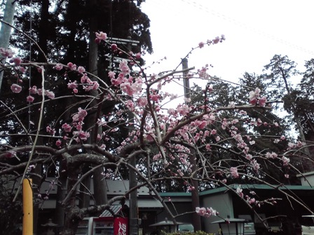 2016_03_10_田村神社_097