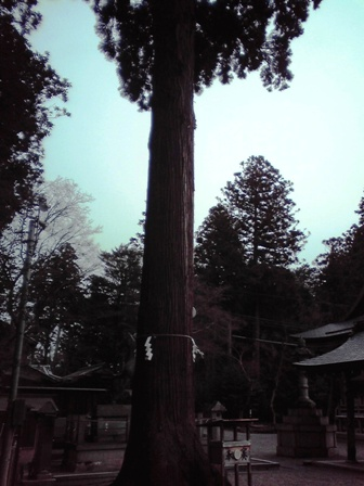 2016_03_10_田村神社_128