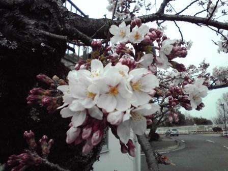 2016_03_26_カーテン交換_41