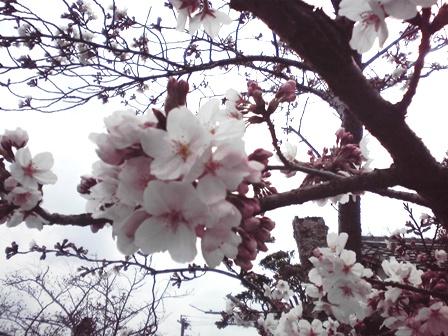 2016_03_26_カーテン交換_40