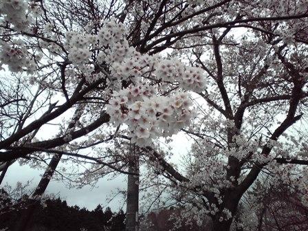 2016_04_06_34.jpg