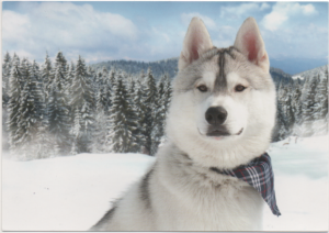 犬  ロシア