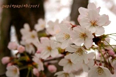 桜2016★2