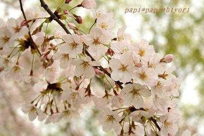 桜2016★3
