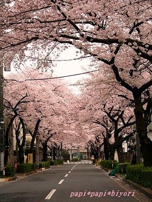 桜2016★4