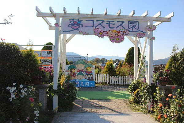 2015.10.29 亀岡夢コスモス園①-1