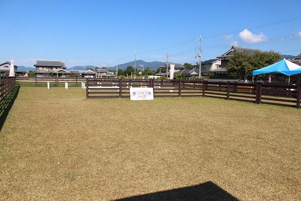 2015.10.29 亀岡夢コスモス園①-11