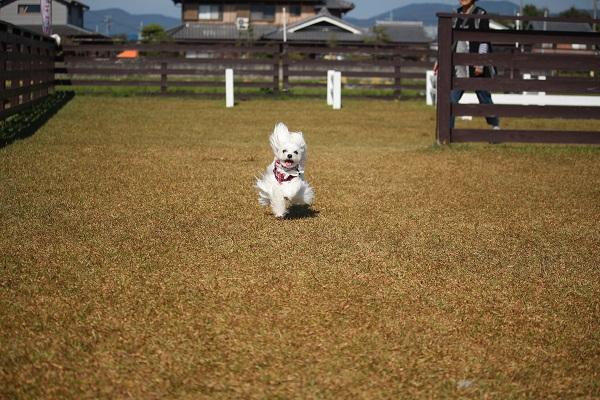 2015.10.29 亀岡夢コスモス園①-15
