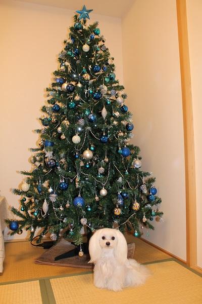 2015.12.01 今年はクリスマスツリー出しましたよ☆-5